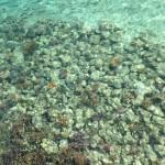 Fijin turkoosinsininen vesi!